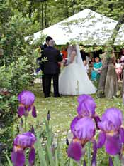 Irises in bloom w/ wedding couple and tent